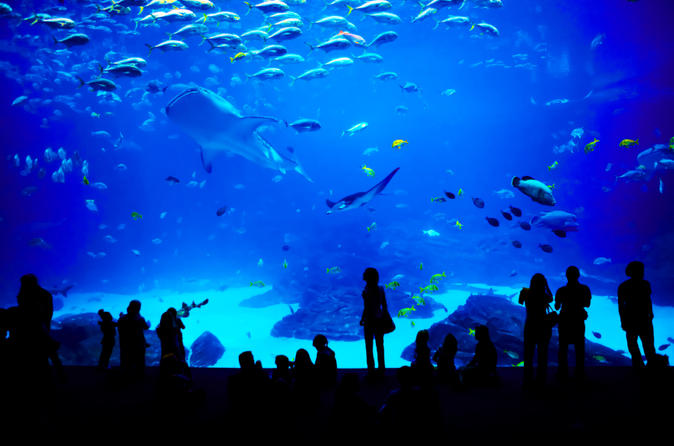 Singapore travel record Sea aquarium