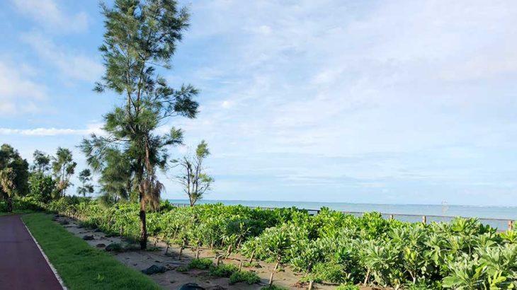 最終日は晴れたのでジョギングとビーチ!@レンタカーも借りずに沖縄でのんびり家族旅行